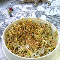 绿豆芽养成记