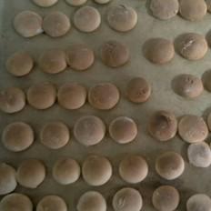 家庭版小石头饼干