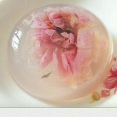玫瑰海石花