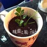 片假名盆栽椰奶冻的做法
