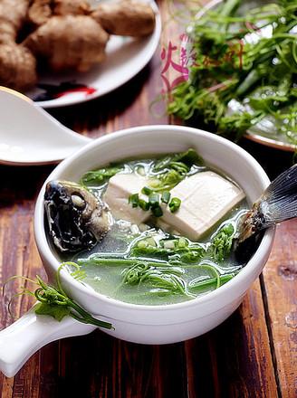 佛手瓜苗鯽魚湯的做法