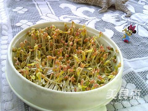 绿豆芽养成记成品图